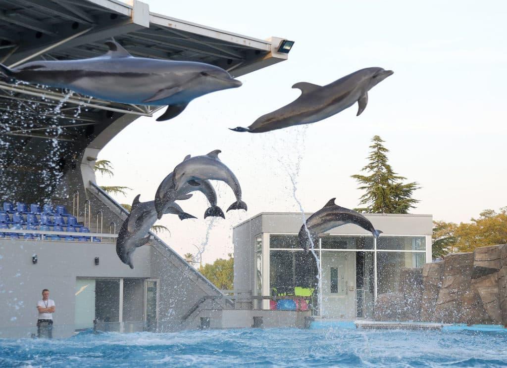 прыгают дельфины