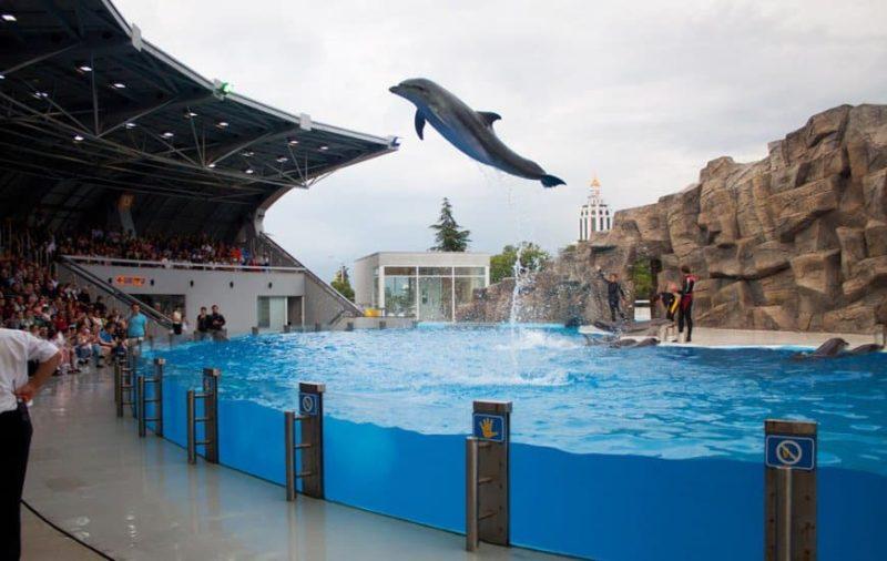 дельфин в прыжке