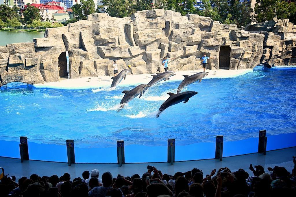 представление дельфины