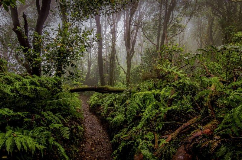 Годердзийский лес