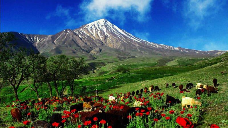 Растительный мир грузии