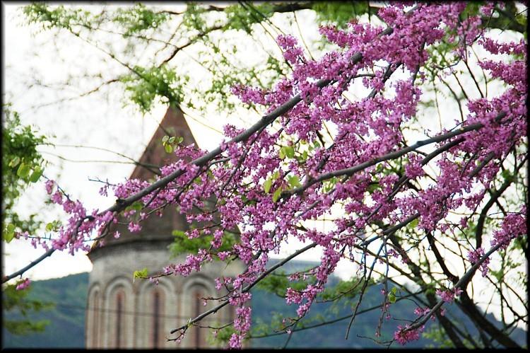 Весна в Грузии