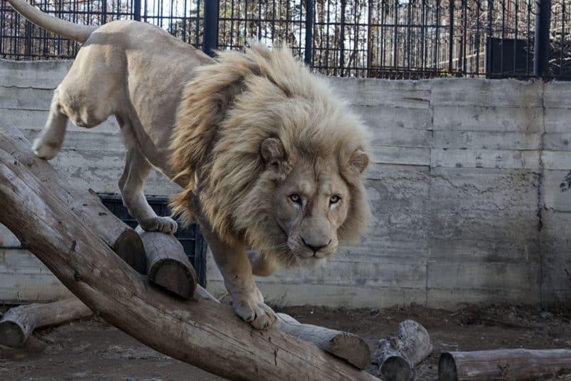 Зоопарк в Тбилиси